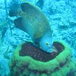 big sponges